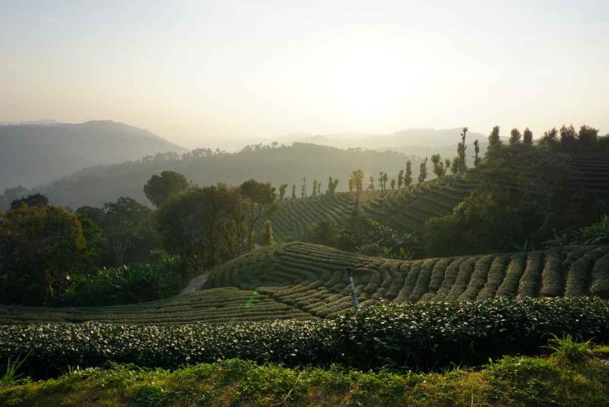 101 Tea Green View