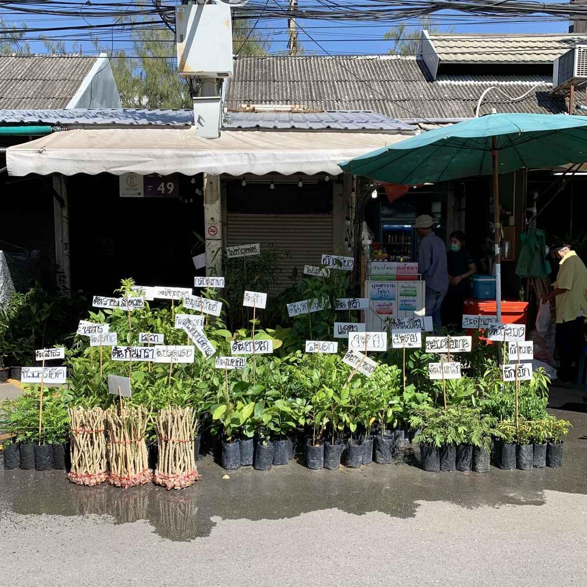 ตลาดต้นไม้จตุจักร