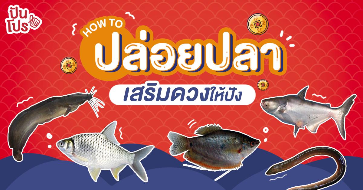วิธีปล่อยปลาอย่างถูกวิธี พร้อมแชร์ทริคเสริมดวงประจำวันเกิด