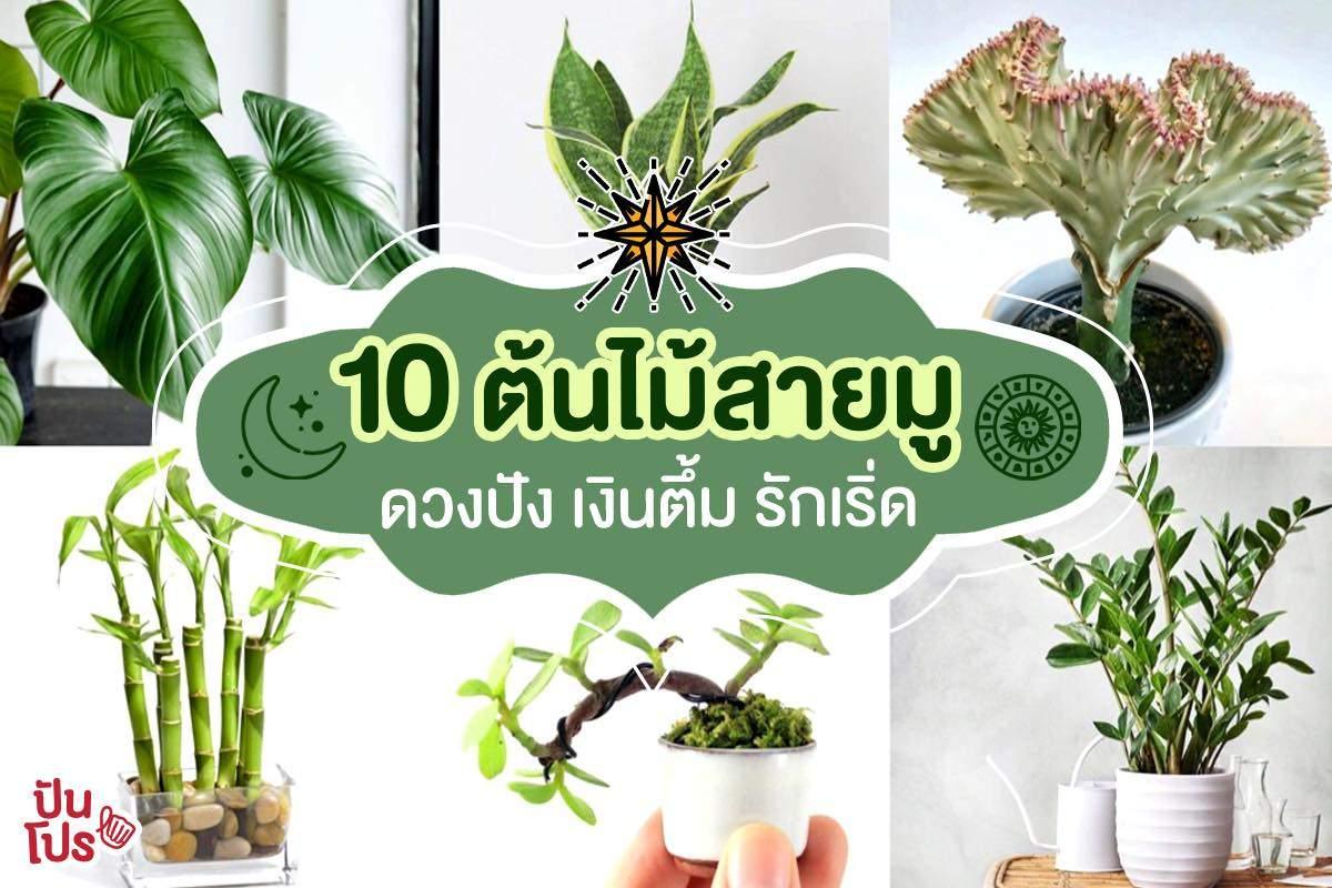 10 ต้นไม้เสริมดวงเฮง มีติดบ้านอุ่นใจ ที่สายมูไม่ควรพลาด!! | ปันโปร - Punpromotion